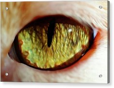 Looking Into The Soul Acrylic Print by Mariola Bitner