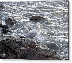 Looking Out To Sea Acrylic Print by Eunice Miller