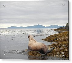 Acrylic Print featuring the photograph Looking Seaward by Laura  Wong-Rose