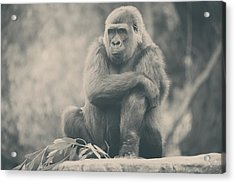 Looking So Sad Acrylic Print