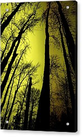 Looking Through The Naked Trees  Acrylic Print by Jeff Swan