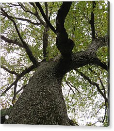 Acrylic Print featuring the photograph Looking Up A Tree by Eric Switzer