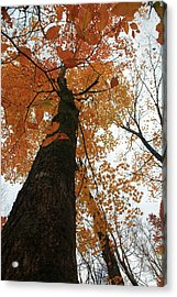 Acrylic Print featuring the photograph Looking Up by Alicia Knust