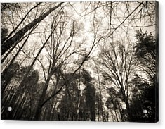 Looking Up At Trees Acrylic Print