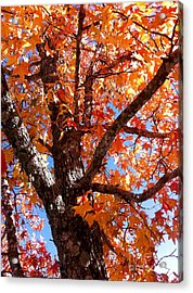 Looking Up Acrylic Print by Barbara Shallue