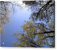Acrylic Print featuring the digital art Looking Up By Angela Clay by Angelia Hodges Clay