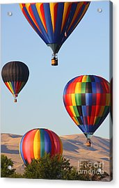 Looking Up Acrylic Print by Carol Groenen