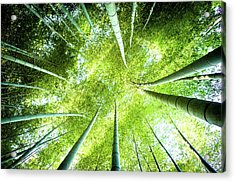 Looking Up In The Bamboo Grove Acrylic Print by Marser