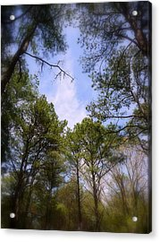 Acrylic Print featuring the photograph Looking Up by Jim Whalen