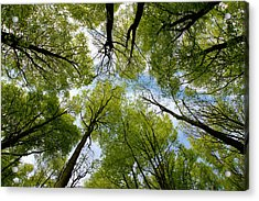 Acrylic Print featuring the digital art Looking Up by Ron Harpham