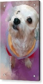 Looking Up To You Acrylic Print by Tony Chong