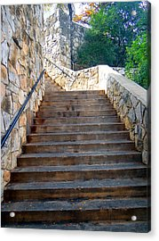 Looking Up Acrylic Print by Tom DiFrancesca