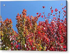 Acrylic Print featuring the photograph Looking Upward by Debbie Hart