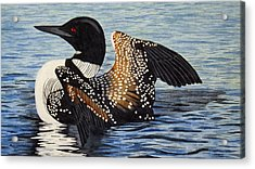 Loon In Flight Acrylic Print