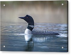 Acrylic Print featuring the photograph Loon by Jack Bell