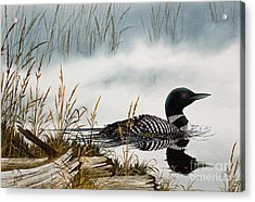 Loons Misty Shore Acrylic Print by James Williamson
