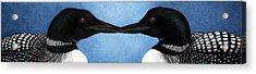 Loons Acrylic Print