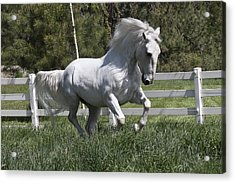 Acrylic Print featuring the photograph Loose In The Paddock 5594 by Wes and Dotty Weber