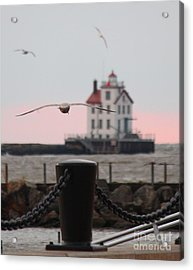 Lorain Lighthouse With Gulls Cropped Acrylic Print