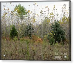 Loss Acrylic Print by Kathie Chicoine