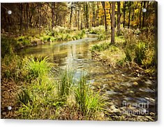 Lost Creek In Autumn Morning Acrylic Print by Iris Greenwell