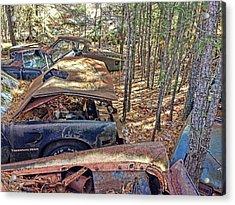 Lost Firebird Acrylic Print