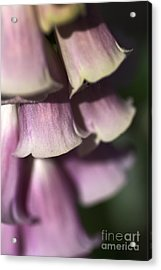 Acrylic Print featuring the photograph Lost In A Foxglove by Joy Watson