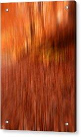 Lost In Autumn Acrylic Print