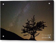Lost In The Night Acrylic Print by James BO  Insogna