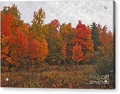 Lost In The Refuge Acrylic Print