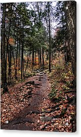 Acrylic Print featuring the photograph Lost In Thought On The Blue Ridge Parkway Trail by Debbie Green