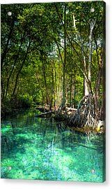 Lost Lagoon On The Yucatan Coast Acrylic Print