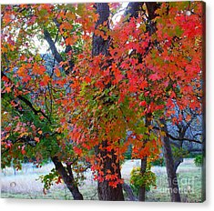 Lost Maples Fall Foliage Acrylic Print
