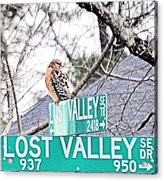 Lost Valley Raptor Acrylic Print