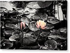 Lotus 4 Acrylic Print