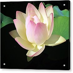 Lotus 9 Acrylic Print by Dawn Eshelman