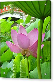 Lotus And Bridge Acrylic Print by Larry Knipfing