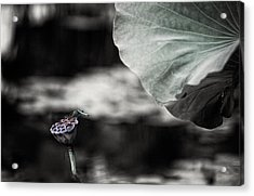 Lotus And Dragonfly 2 Acrylic Print