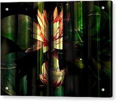 Lotus Bamboo  Acrylic Print