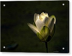 Acrylic Print featuring the photograph Lotus Blossom by Travis Burgess