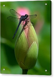 Acrylic Print featuring the photograph Lotus Bud And Slatey Skimmer Dragonfly Dl006 by Gerry Gantt