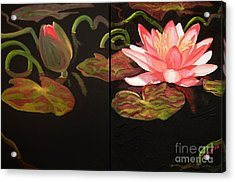 Lotus Bud To Bloom Acrylic Print by Janet McDonald