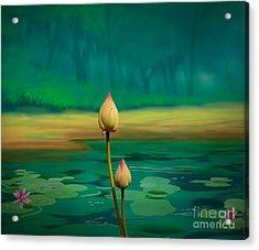 Lotus Buds Acrylic Print by Bedros Awak
