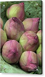 Lotus Buds Acrylic Print by Rick Piper Photography