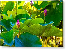 Lotus Garden Acrylic Print by Roselynne Broussard