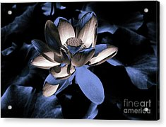Lotus By Night Acrylic Print