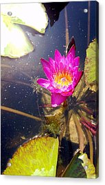 Lotus Day Acrylic Print