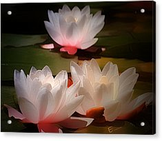 Lotus Flower 6 Acrylic Print by Ernestine Manowarda