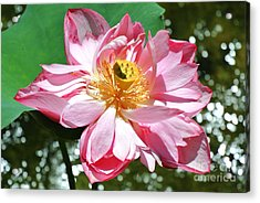 Lotus Flower Acrylic Print by Sarah Christian