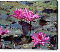 Acrylic Print featuring the photograph Lotus Flower by Sergey Lukashin